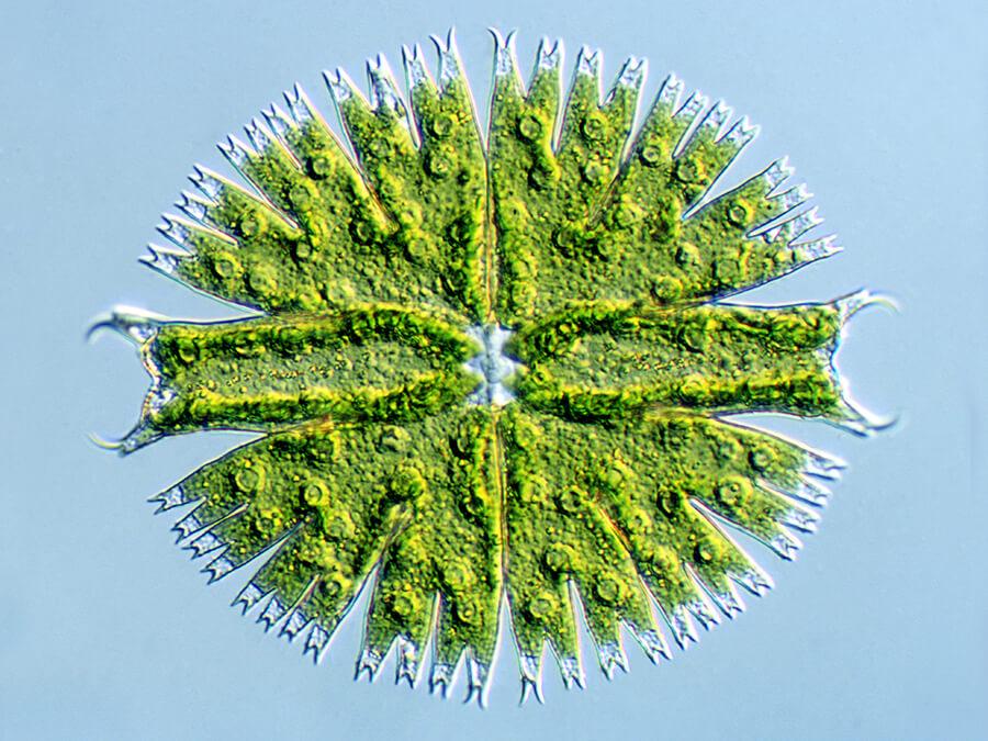 Le monde méconnu et merveilleux des micro-algues