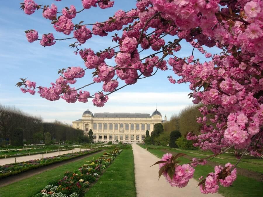 Miracle des fleurs au jardin des plantes