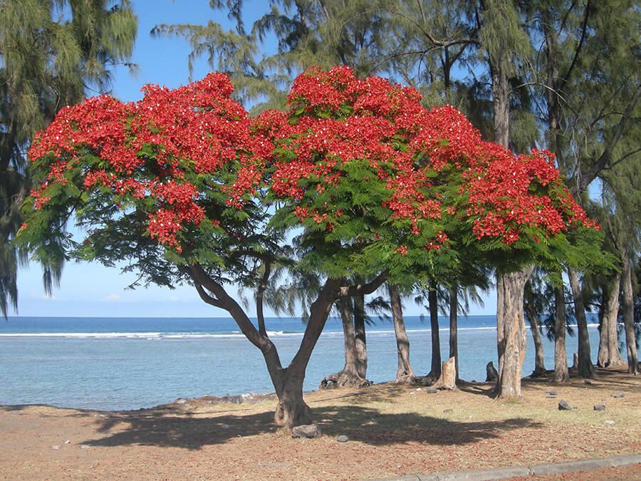 L'île Bourbon, sur la route de la Compagnie des Indes