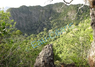 """Spectacle enchanteur par le parfum des plantes en plein cœur du volcan """"The Quill"""" (photo. A.-M. Lejeune)"""