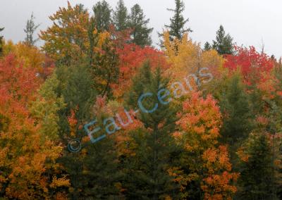 Féérie des couleurs de la végétation à l'aube de l'automne