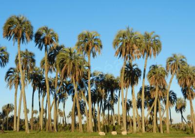 Parc national, El Palmar