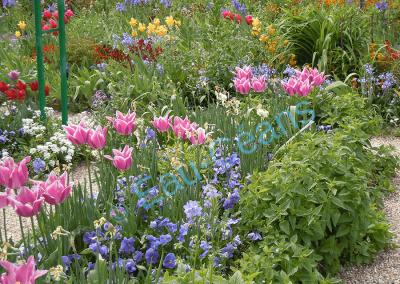 """""""Tout mon argent passe dans mon jardin"""" C. Monet"""