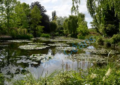 Le jardin d'eau, à Giverny