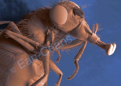 Profil d'une mouche observée au microscope électronique à balayage (photo. T. Berrod)