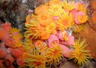 Polypes de coraux épanouis
