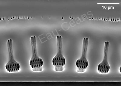 Détail d'un fragment de squelette en verre d'une diatomée d'eau douce vue en microscopie électronique à balayage