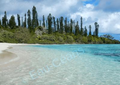 L'île Môrô, avec ses pins colonnaires typiques